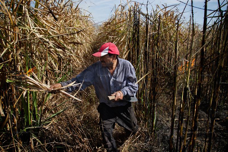 http://jeremiasgonzalez.com/files/gimgs/50_agricultura-familiar15bd_v2.jpg